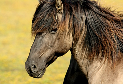 Horse 337215 640